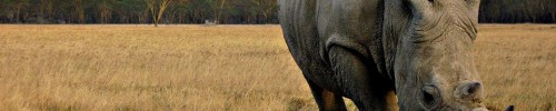 rhino-the-six-best-reasons-to-visit-kenya