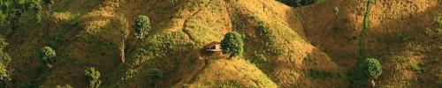 bandarban-paddies-bangladesh_46130_990x742